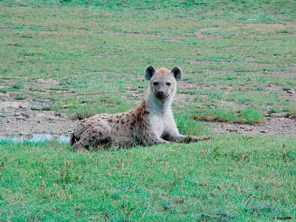 Serengeti 2001 - 2003