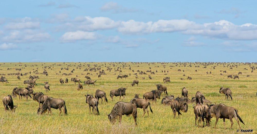 Serengeti 2009