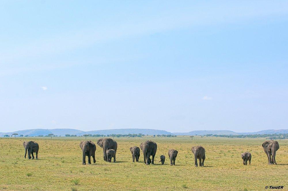 Serengeti 2014