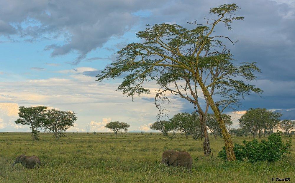Serengeti 2010