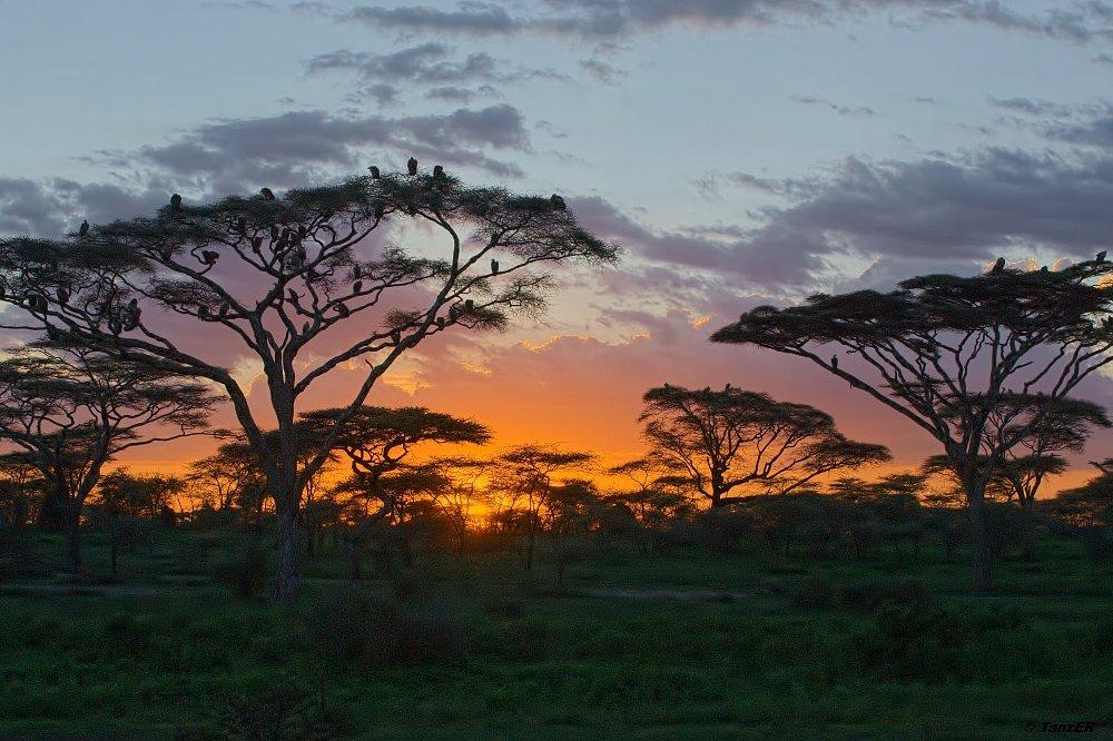 Sonnenuntergang im Ndutu