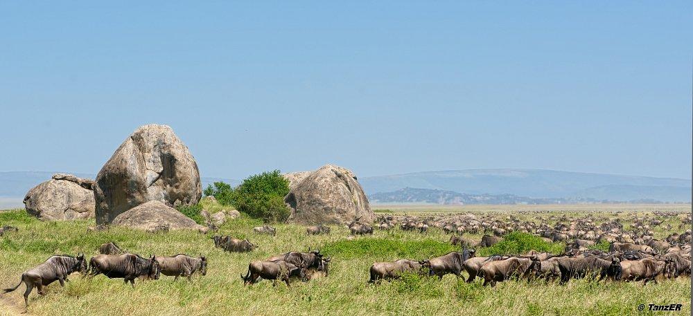 Serengeti 2013
