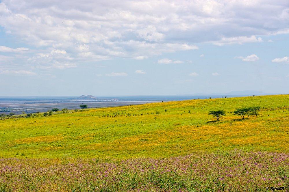 Engusuro Plain
