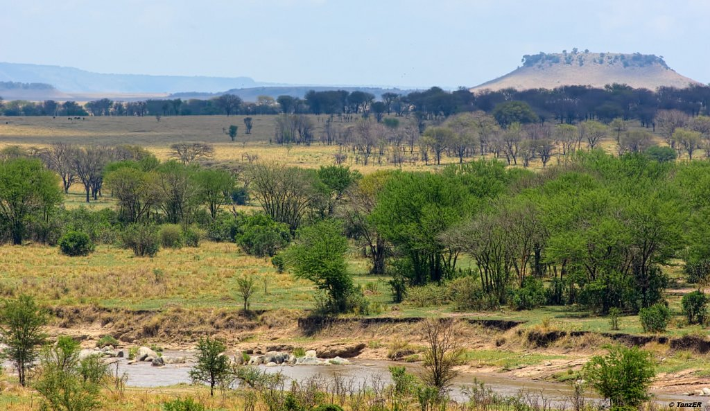 Mara River