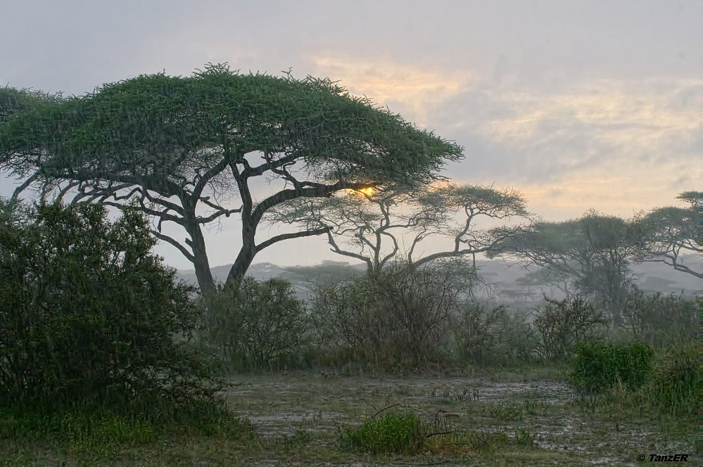 Regennasser Sonnenaufgang/Wet Season Sunrise